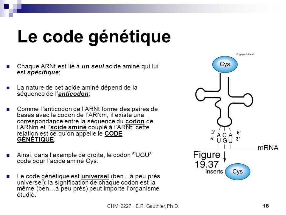 CHMI 2227 - E.R. Gauthier, Ph.D.18 Le code génétique Chaque ARNt est lié à un seul acide aminé qui lui est spécifique; La nature de cet acide aminé dé