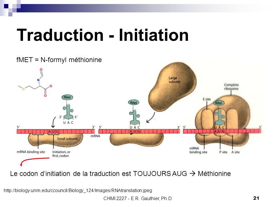 CHMI 2227 - E.R. Gauthier, Ph.D.21 Traduction - Initiation Le codon d'initiation de la traduction est TOUJOURS AUG  Méthionine fMET = N-formyl méthio