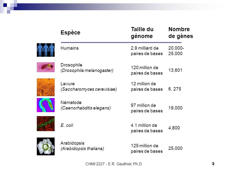 CHMI 2227 - E.R. Gauthier, Ph.D.3 Espèce Taille du génome Nombre de gènes Humains 2.9 milliard de paires de bases 20,000- 25,000 Drosophile (Drosophil