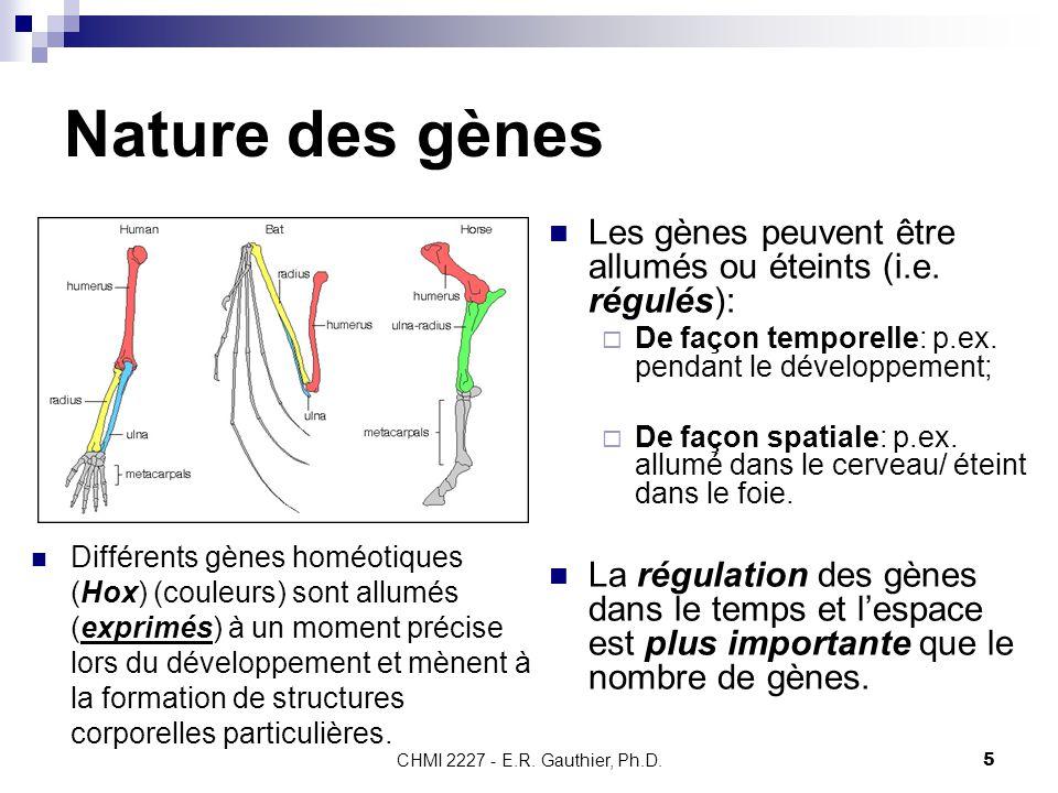 CHMI 2227 - E.R. Gauthier, Ph.D.5 Nature des gènes Les gènes peuvent être allumés ou éteints (i.e. régulés):  De façon temporelle: p.ex. pendant le d