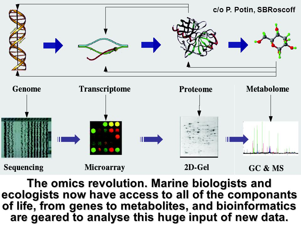 Contribution of genomics to marine sciences c/o Catherine Boyen, SB Roscoff Genomics Environmental Structural Functional Environment and Climate change, Adaptation Management of Marine Resources Gene mining for Health and Biotech Marine genomics allows to draw global conclusions about our surrounding environment and to take a holistic approach to ocean management Evolution of life.