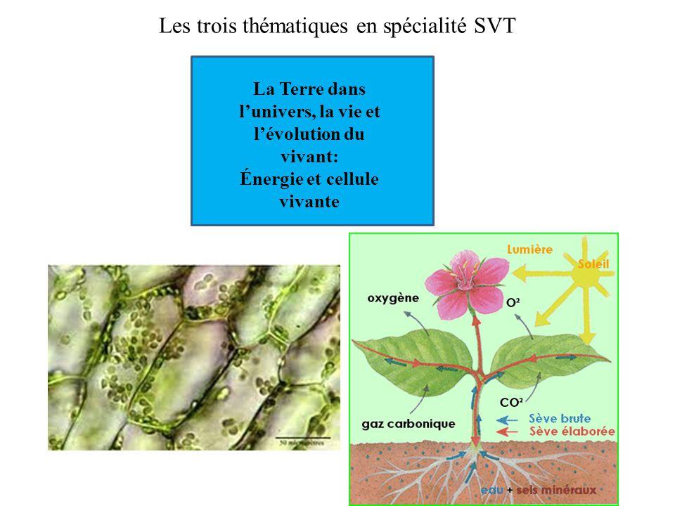 Les trois thématiques en spécialité SVT La Terre dans l'univers, la vie et l'évolution du vivant: Énergie et cellule vivante