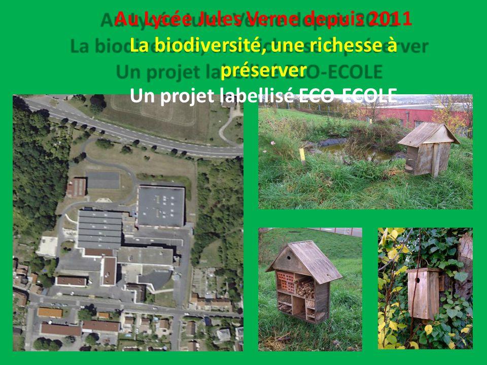 Au Lycée Jules Verne depuis 2011 La biodiversité, une richesse à préserver Un projet labellisé ECO-ECOLE