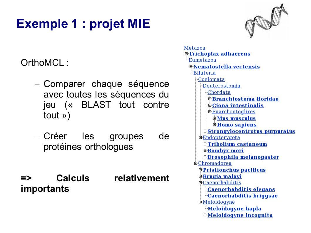OrthoMCL : – Comparer chaque séquence avec toutes les séquences du jeu (« BLAST tout contre tout ») – Créer les groupes de protéines orthologues => Calculs relativement importants Exemple 1 : projet MIE