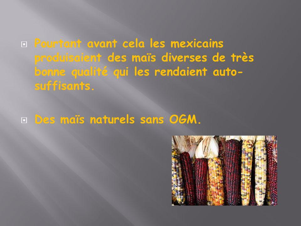  Pourtant avant cela les mexicains produisaient des maïs diverses de très bonne qualité qui les rendaient auto- suffisants.