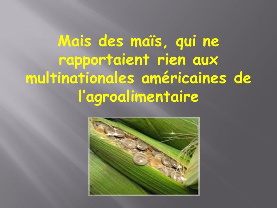 Mais des maïs, qui ne rapportaient rien aux multinationales américaines de l'agroalimentaire