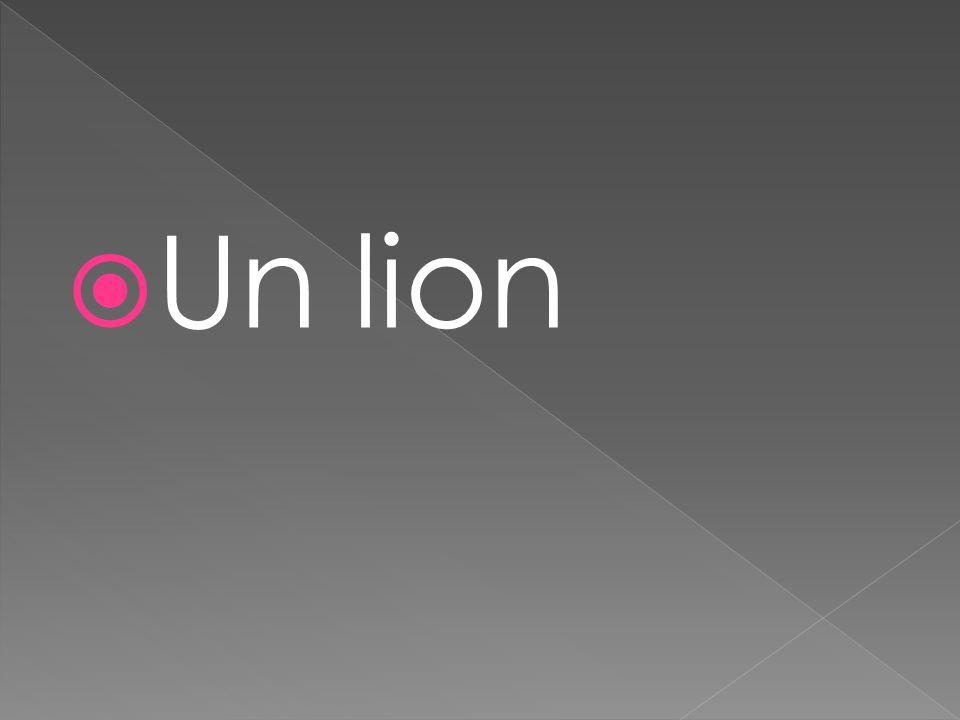  Un lion