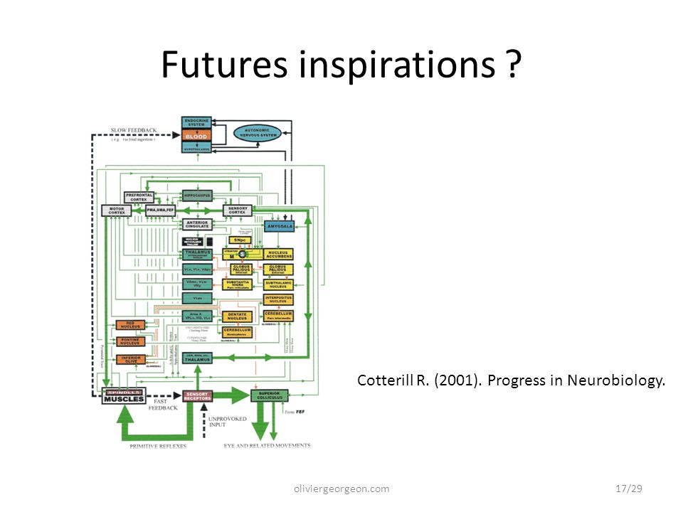 Futures inspirations ? oliviergeorgeon.com Cotterill R. (2001). Progress in Neurobiology. 17/29