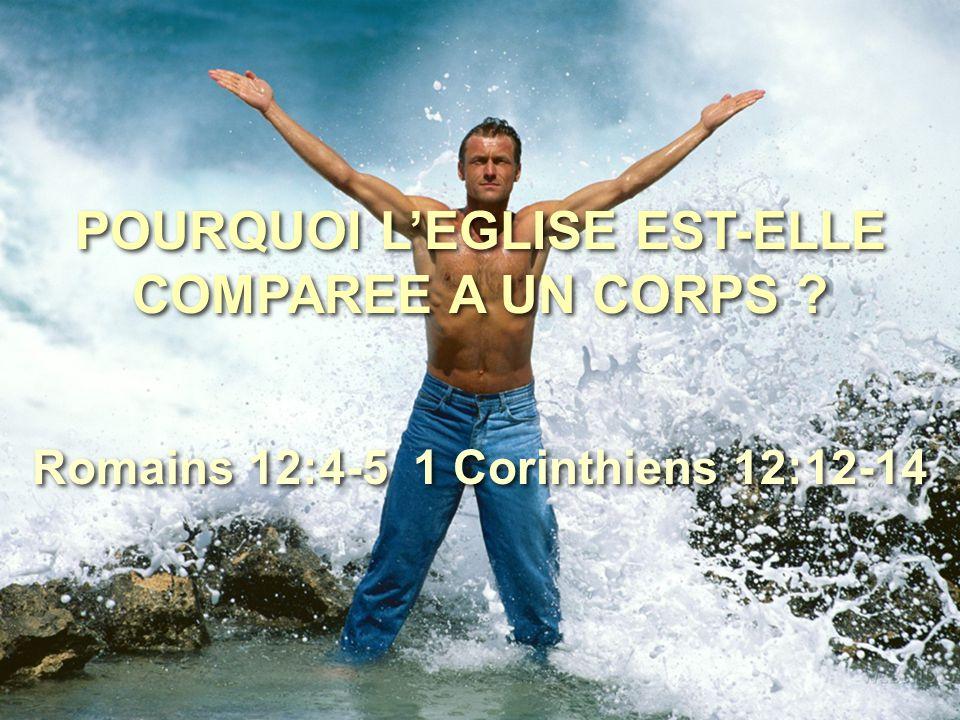 POURQUOI L'EGLISE EST-ELLE COMPAREE A UN CORPS ? Romains 12:4-5 1 Corinthiens 12:12-14