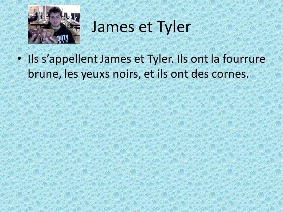 James et Tyler Ils s'appellent James et Tyler. Ils ont la fourrure brune, les yeuxs noirs, et ils ont des cornes.