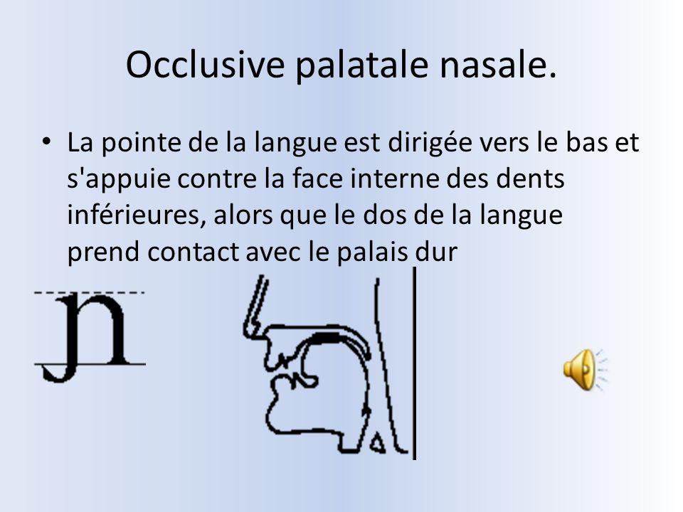 Occlusive palatale nasale. La pointe de la langue est dirigée vers le bas et s'appuie contre la face interne des dents inférieures, alors que le dos d