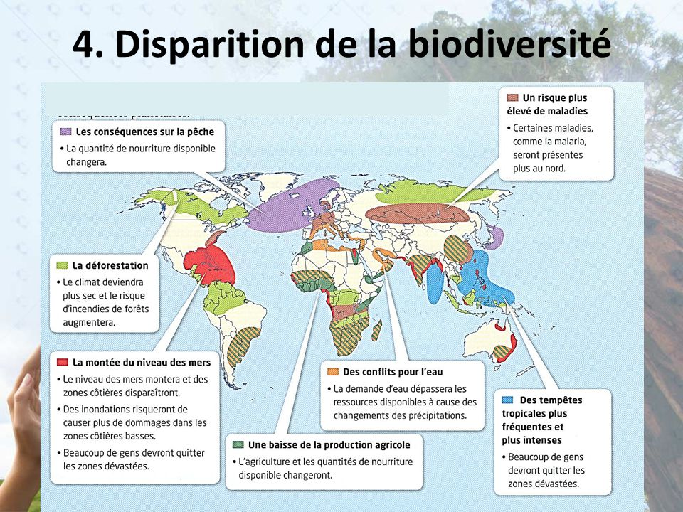 4. Disparition de la biodiversité