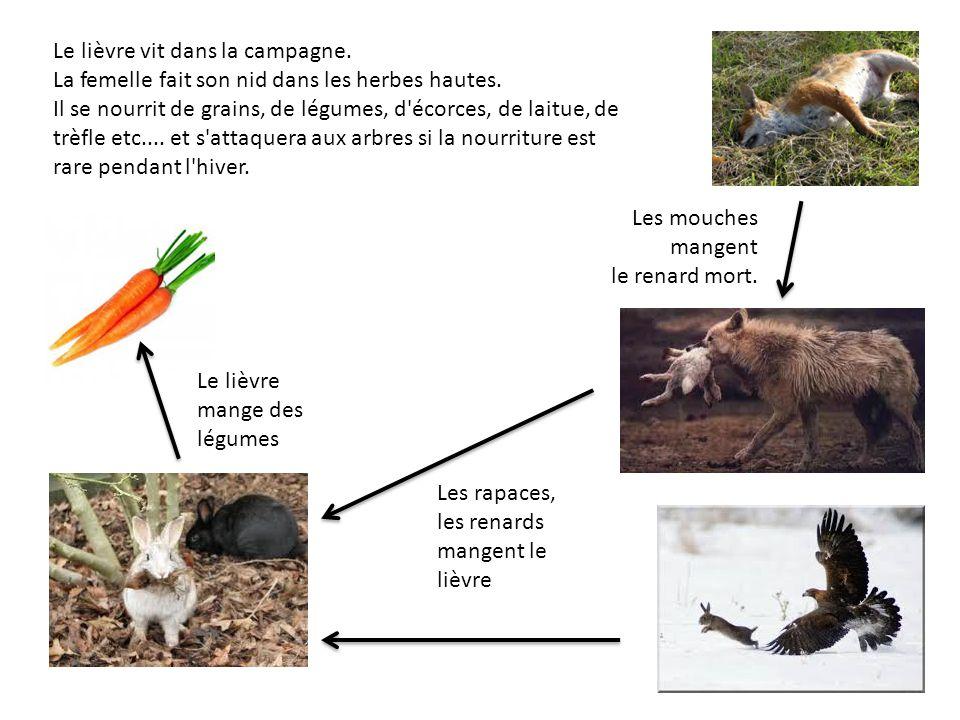 Le lièvre vit dans la campagne. La femelle fait son nid dans les herbes hautes. Il se nourrit de grains, de légumes, d'écorces, de laitue, de trèfle e