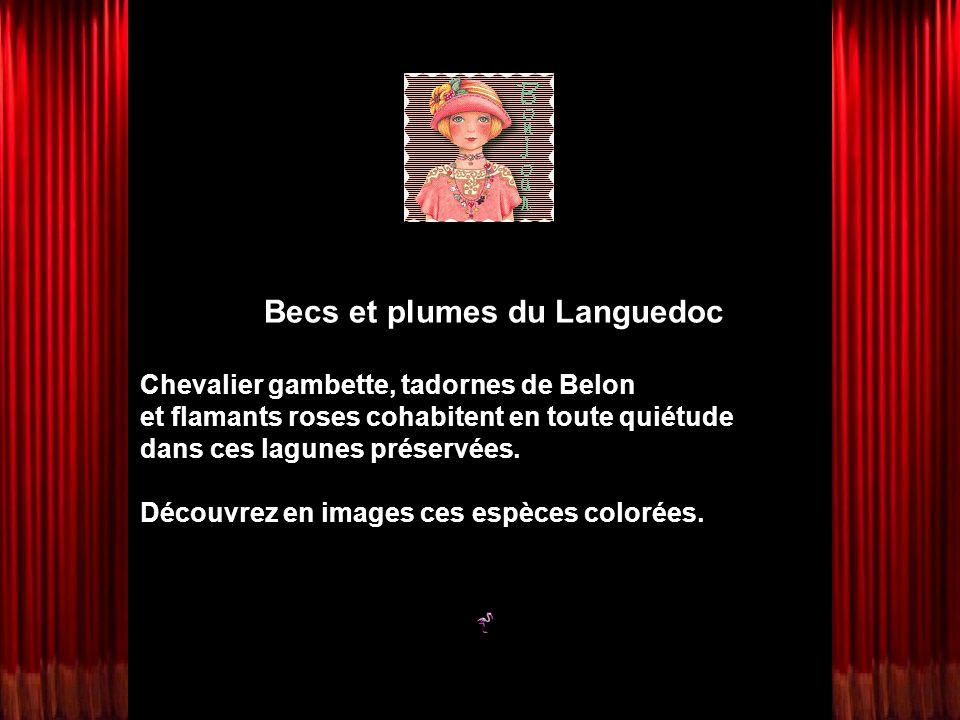 Becs et plumes du Languedoc Chevalier gambette, tadornes de Belon et flamants roses cohabitent en toute quiétude dans ces lagunes préservées. Découvre