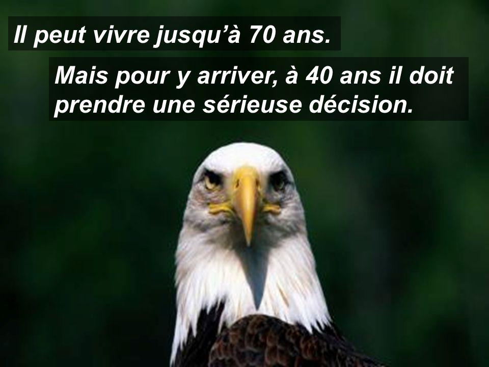 L'aigle est l'oiseau qui possède la plus grande longévité.