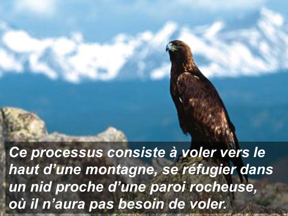 L'aigle est alors devant un choix: Mourir... ou faire face à un douloureux processus de renouvellement qui durera 150 jours.