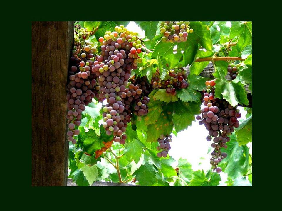 A bon vin ne faut point d'enseigne. Proverbe français