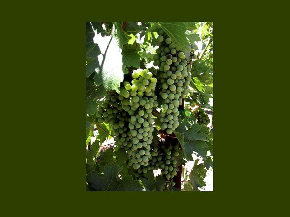 Le vin est innocent, seul l'ivrogne est coupable. Proverbe russe