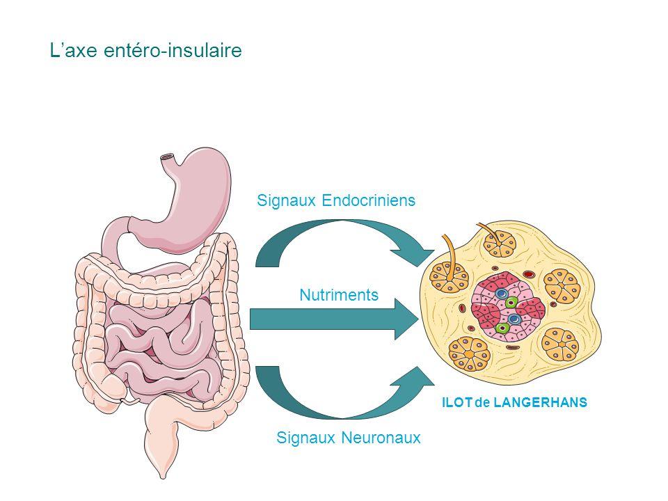 Signaux Endocriniens Signaux Neuronaux Nutriments L'axe entéro-insulaire ILOT de LANGERHANS