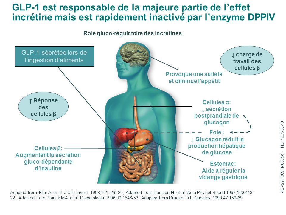 Provoque une satiété et diminue l'appétit Cellules β: Augmentent la secrétion gluco-dépendante d'insuline Foie : ↓ Glucagon réduit la production hépat