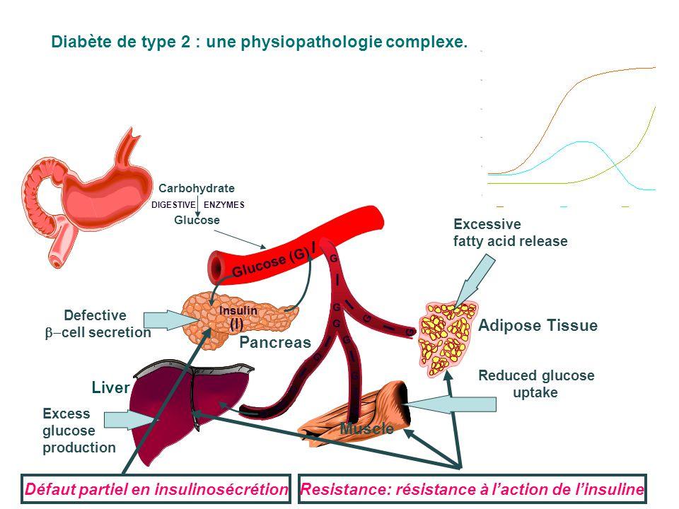 Glucose Insuline I I I I I I I I G G G G G G G G I G G G Tissu adipeux Foie Pancreas Muscle Intestin I G Hydrate de Carbone Estomac  -glucosidase inhibitors Sulfonylurées et meglitinides Biguanides Adapted from Kobayashi M.