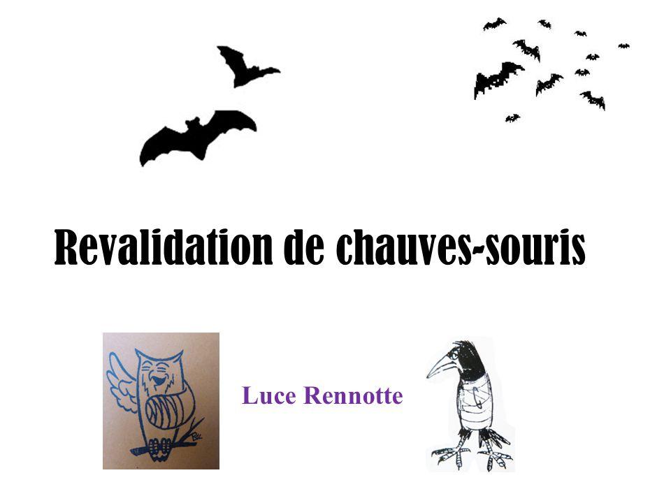Revalidation de chauves-souris Luce Rennotte