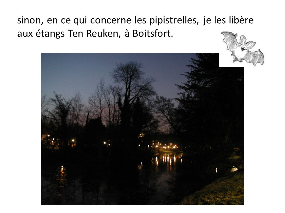 sinon, en ce qui concerne les pipistrelles, je les libère aux étangs Ten Reuken, à Boitsfort.