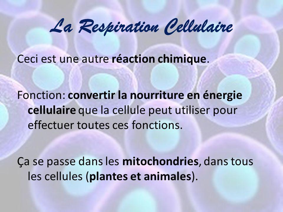 La Respiration Cellulaire Ceci est une autre réaction chimique. Fonction: convertir la nourriture en énergie cellulaire que la cellule peut utiliser p