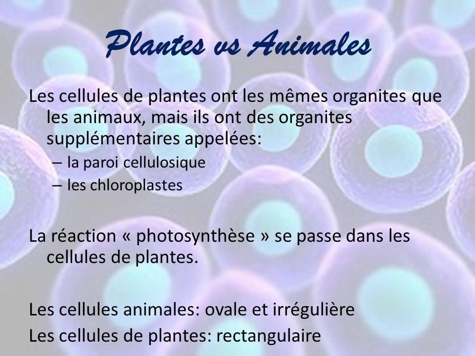 Plantes vs Animales Les cellules de plantes ont les mêmes organites que les animaux, mais ils ont des organites supplémentaires appelées: – la paroi c
