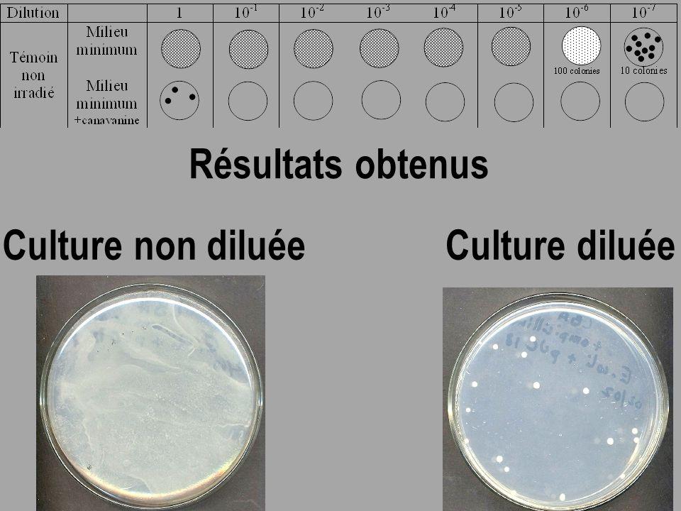Quel est le nombre de cellules présentes dans le milieu sans canavanine et dans le milieu avec canavanine au début de l'expérience ?