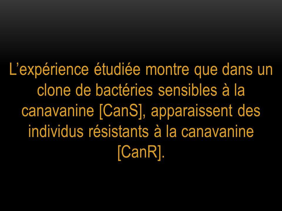 Un caractère différent, la résistance à la canavanine, est apparu spontanément dans cette culture microbienne avec une fréquence faible, ici de 4/10 8.