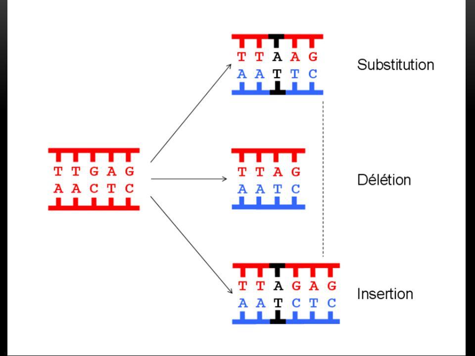 Est-ce que des facteurs peuvent favoriser l'apparition de mutations ?