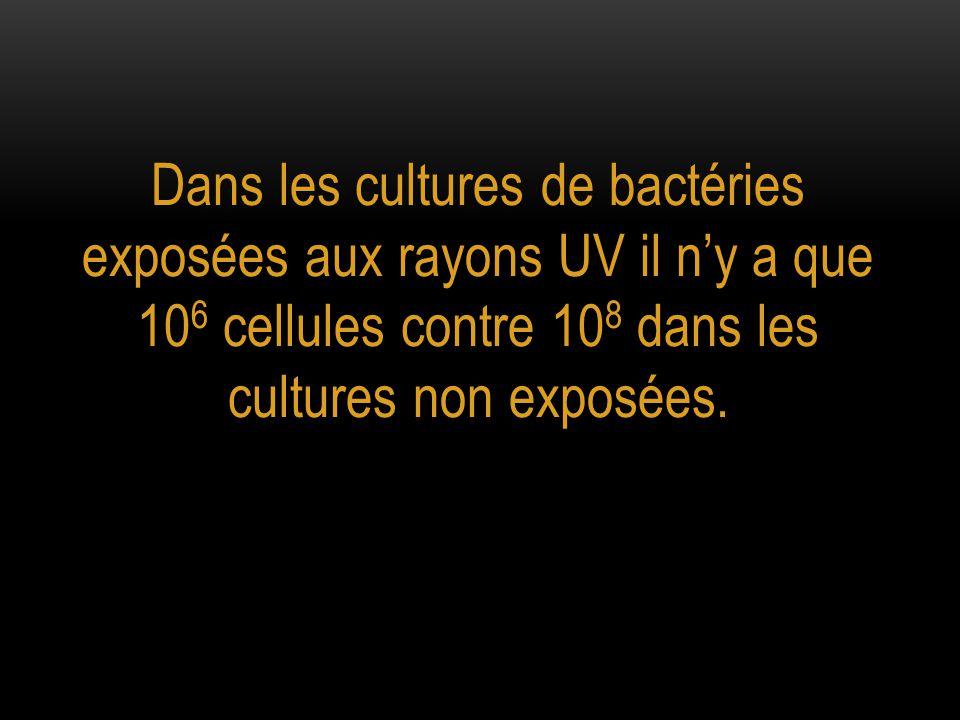 Quelle est l'action des rayons UV sur les bactéries ?