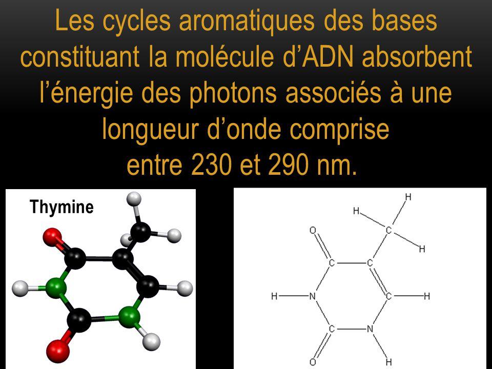 L'énergie absorbée au niveau de deux thymines adjacentes fournit l'énergie nécessaire à la formation d'une liaison covalente entre ces deux bases, au détriment des liaisons hydrogène établies entre deux bases complémentaires
