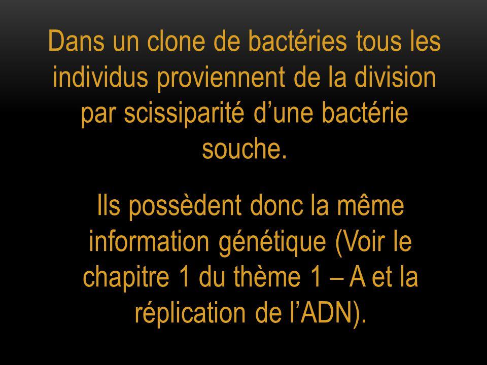 Mise en évidence de mutations spontanées dans une culture bactérienne. Voir TP