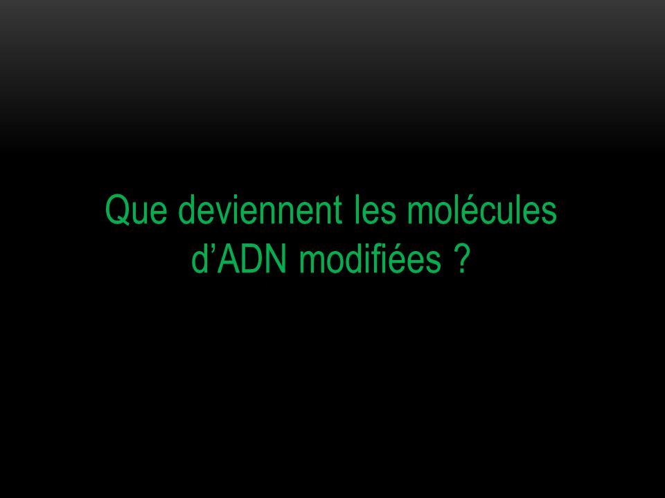 IV / LE DEVENIR DES MOLECULES D'ADN MODIFIEES
