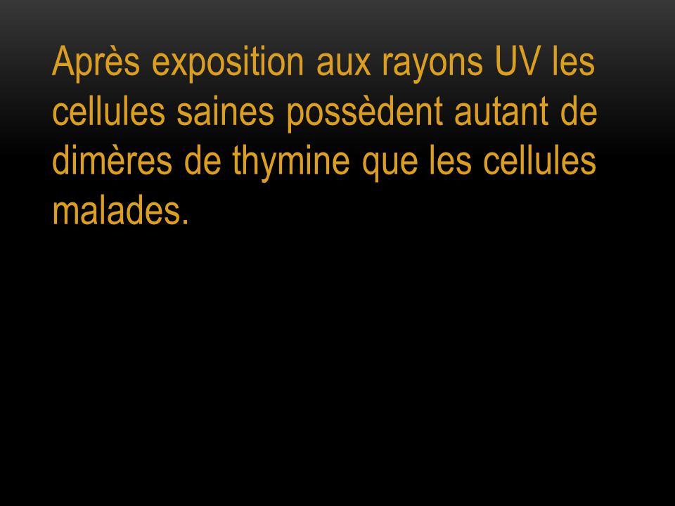 Mais dès que l'exposition aux rayons UV cesse le nombre de dimères de thymine reste constant dans les cellules malades et diminue dans les cellules saines.