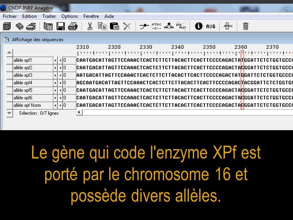 Les personnes qui possèdent l allèle xpf Norm ne sont pas malades alors que celles qui possèdent l un des allèles xpf1 à xpf6 en double exemplaire sont atteintes de Xeroderma pigmentosum à des degrés divers selon la nature de l allèle qu elles portent.