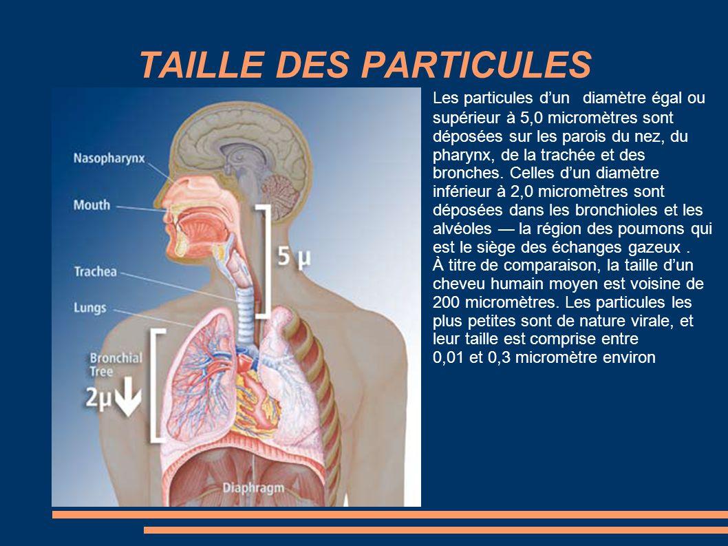 TAILLE DES PARTICULES Les particules d'un diamètre égal ou supérieur à 5,0 micromètres sont déposées sur les parois du nez, du pharynx, de la trachée