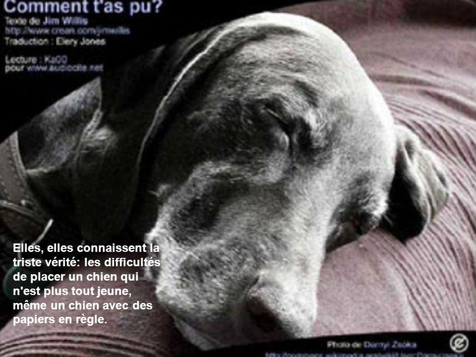 Elles, elles connaissent la triste vérité: les difficultés de placer un chien qui n'est plus tout jeune, même un chien avec des papiers en règle.