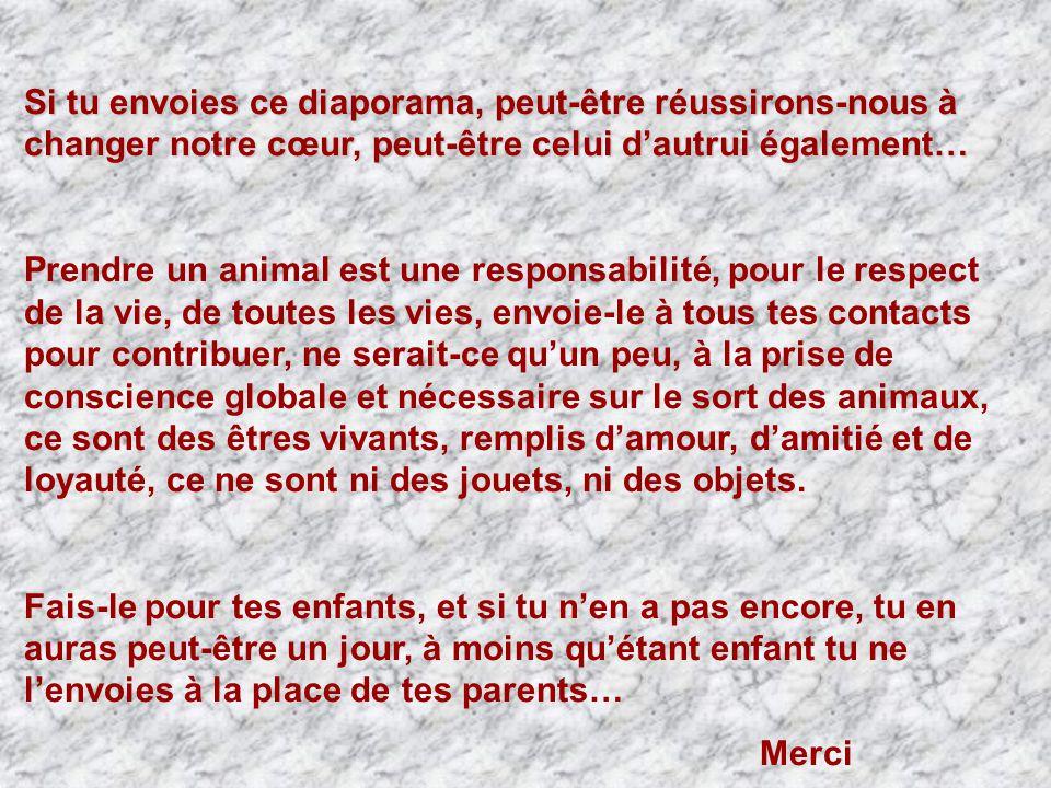 Si tu envoies ce diaporama, peut-être réussirons-nous à changer notre cœur, peut-être celui d'autrui également… Prendre un animal est une responsabilité, pour le respect de la vie, de toutes les vies, envoie-le à tous tes contacts pour contribuer, ne serait-ce qu'un peu, à la prise de conscience globale et nécessaire sur le sort des animaux, ce sont des êtres vivants, remplis d'amour, d'amitié et de loyauté, ce ne sont ni des jouets, ni des objets.
