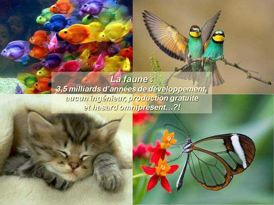 La faune : 3,5 milliards d'années de développement, aucun ingénieur, production gratuite et hasard omniprésent…?!