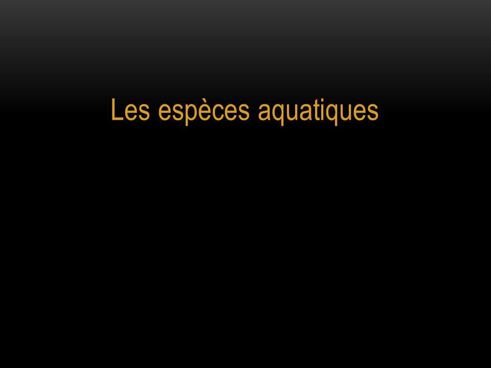 Les espèces aquatiques