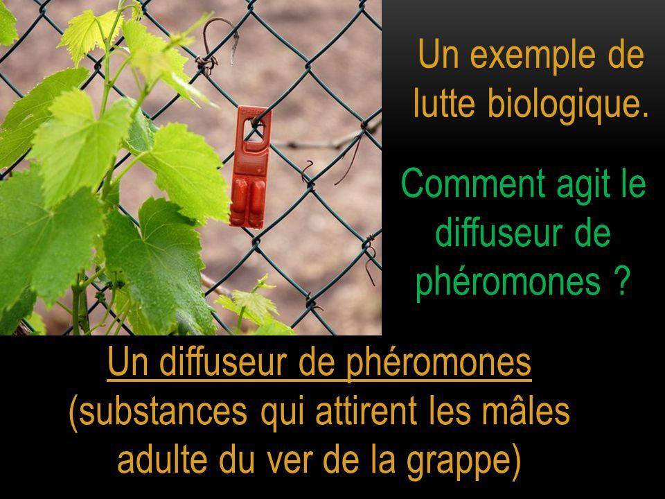 Un exemple de lutte biologique. Un diffuseur de phéromones (substances qui attirent les mâles adulte du ver de la grappe) Comment agit le diffuseur de