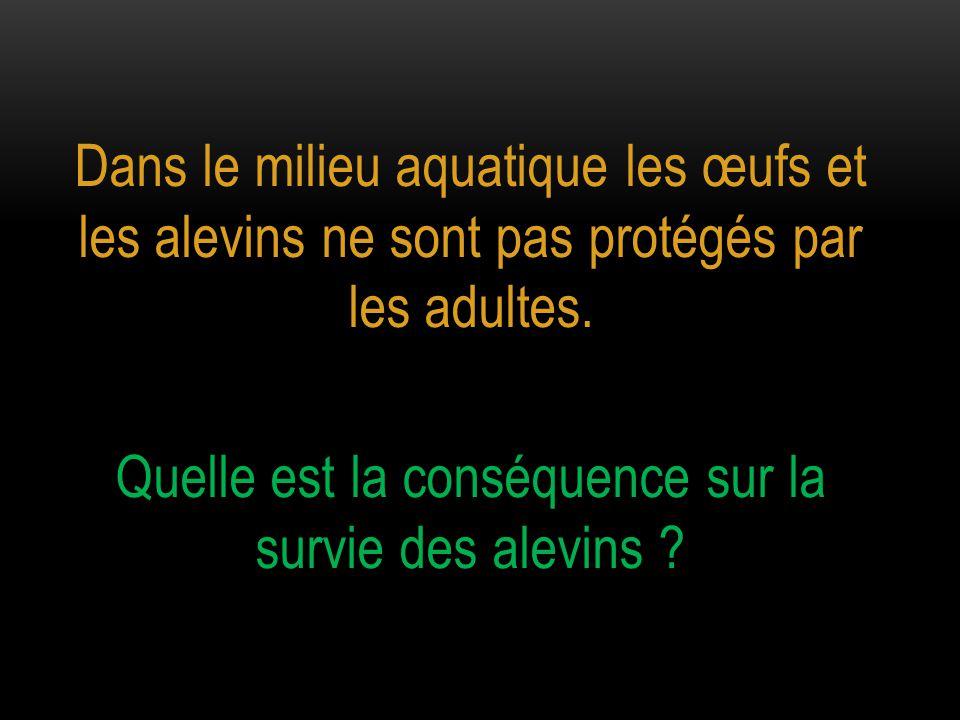 Dans le milieu aquatique les œufs et les alevins ne sont pas protégés par les adultes. Quelle est la conséquence sur la survie des alevins ?