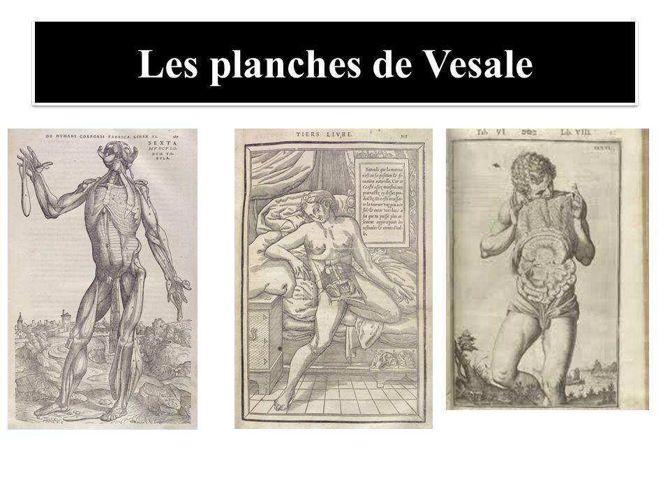 Les planches de Vesale