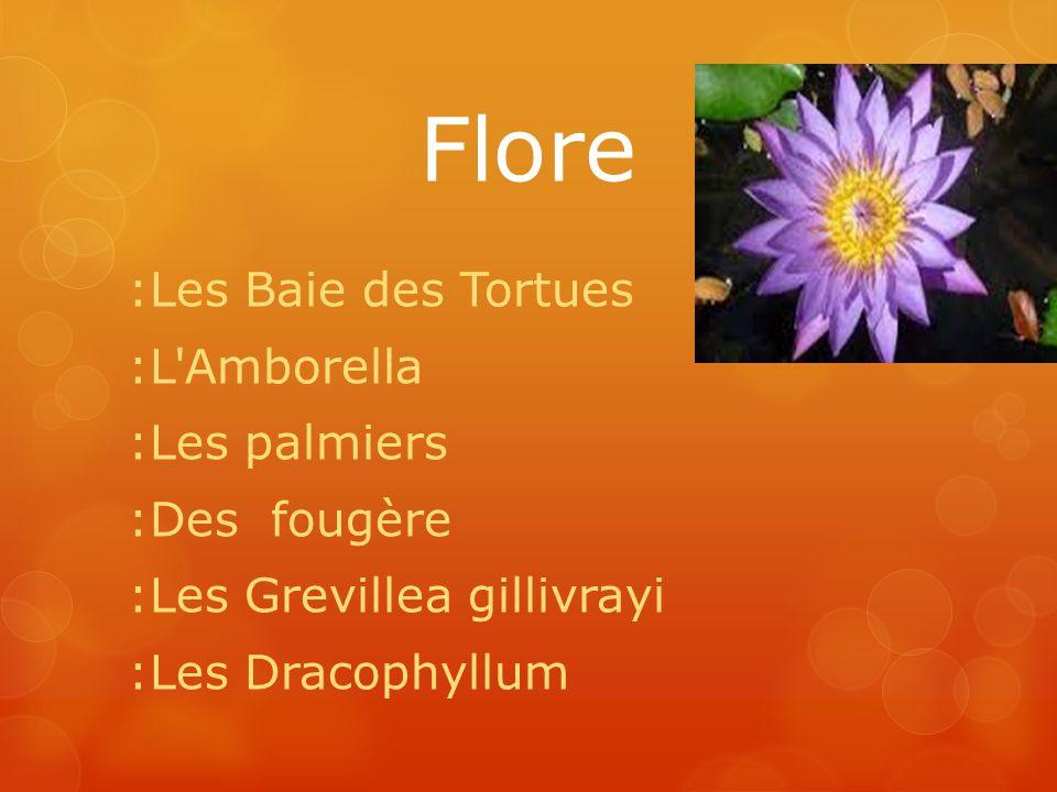 Flore :Les Baie des Tortues :L'Amborella :Les palmiers :Des fougère :Les Grevillea gillivrayi :Les Dracophyllum
