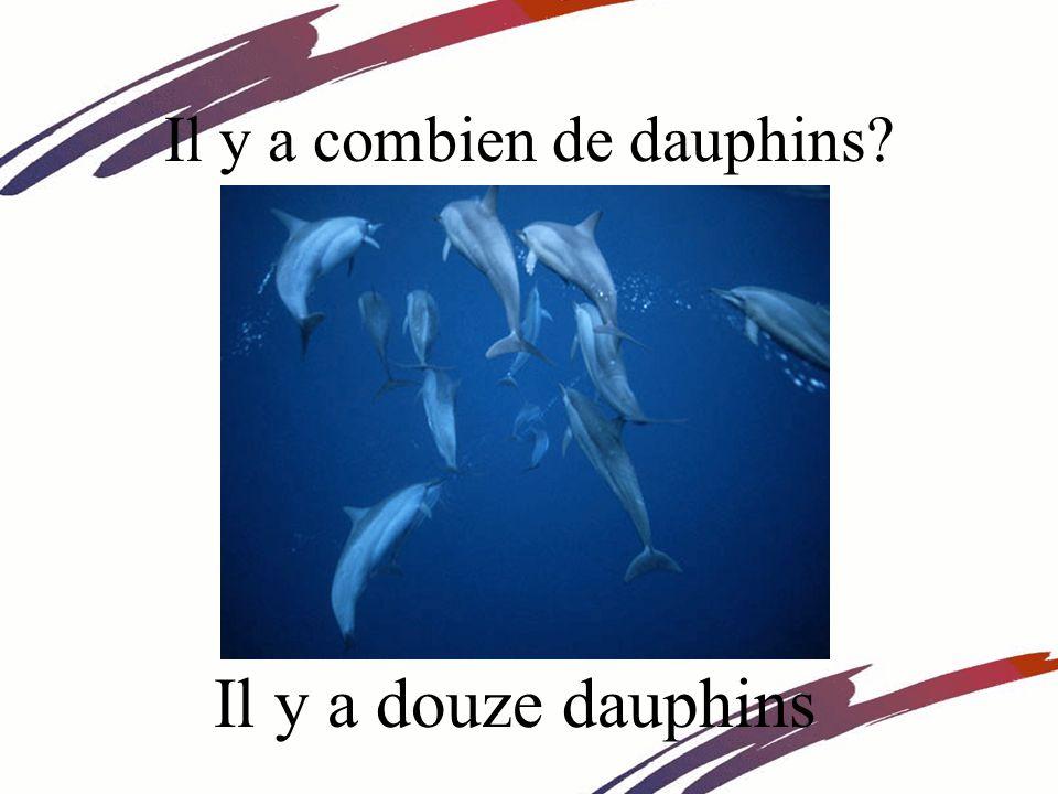 Il y a combien de dauphins Il y a douze dauphins