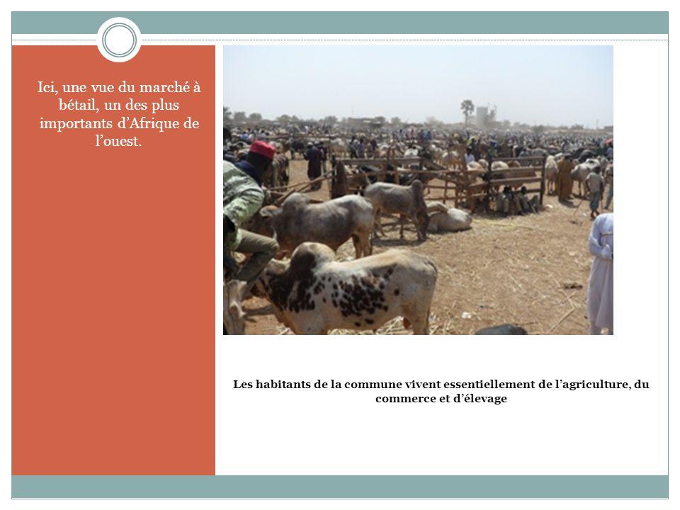 Les habitants de la commune vivent essentiellement de l'agriculture, du commerce et d'élevage Ici, une vue du marché à bétail, un des plus importants d'Afrique de l'ouest.