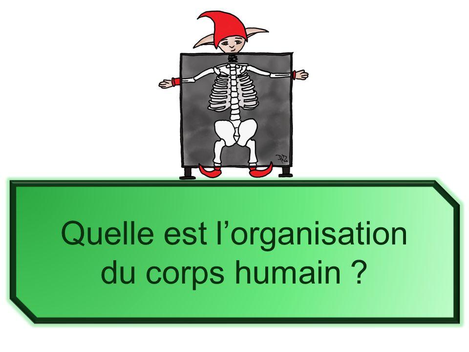 Quelle est l'organisation du corps humain ?